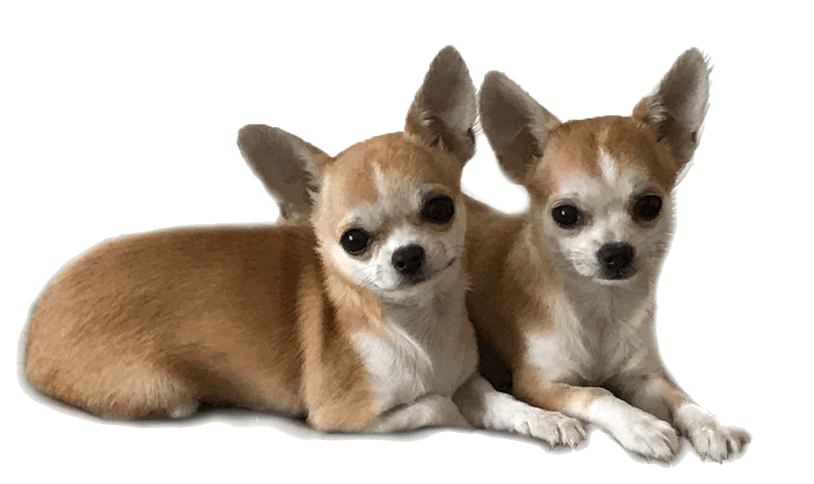 chihulife