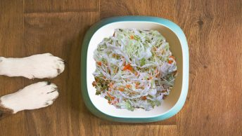 Can dogs eat sauerkraut
