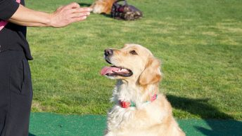 German commands for dog training