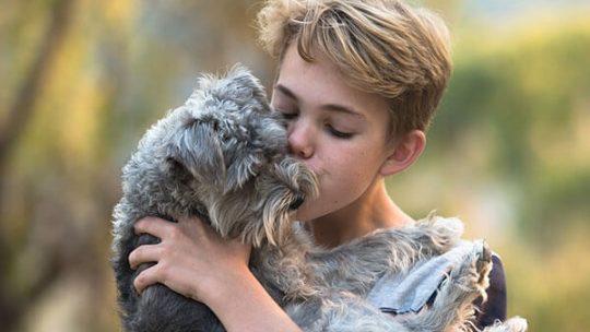 Most affectionate dog breeds