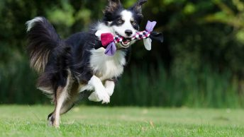 Most hyperactive dog breeds