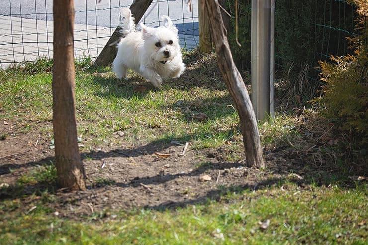 Portable dog runs