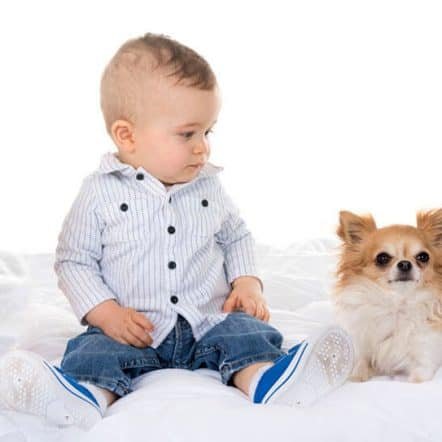 Are Chihuahuas good with kids