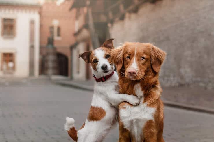 Bad socialized dog