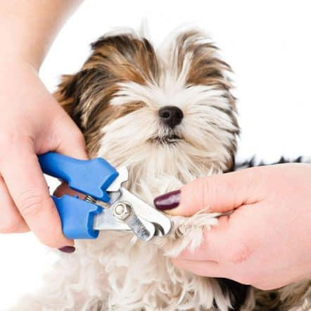 Best dog nail clippers and trimmers
