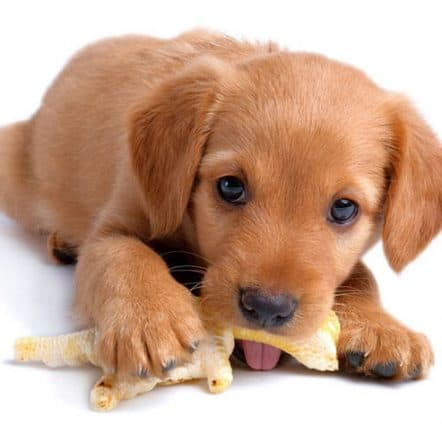 Can dogs eat chicken feet