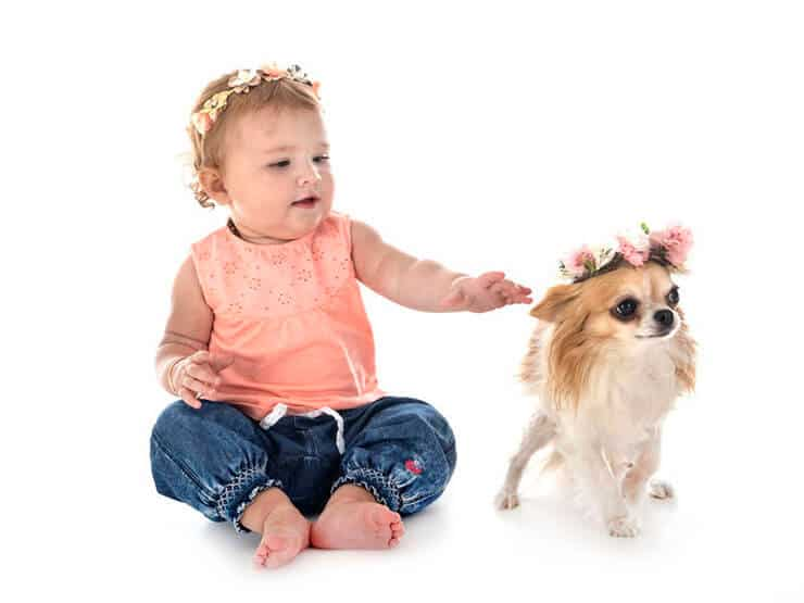 Chihuahua with baby