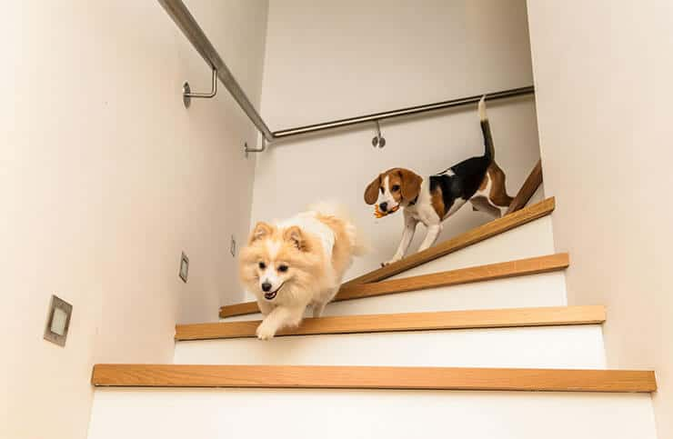 Dogs running around the house