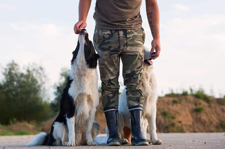 Man with two dogs outside