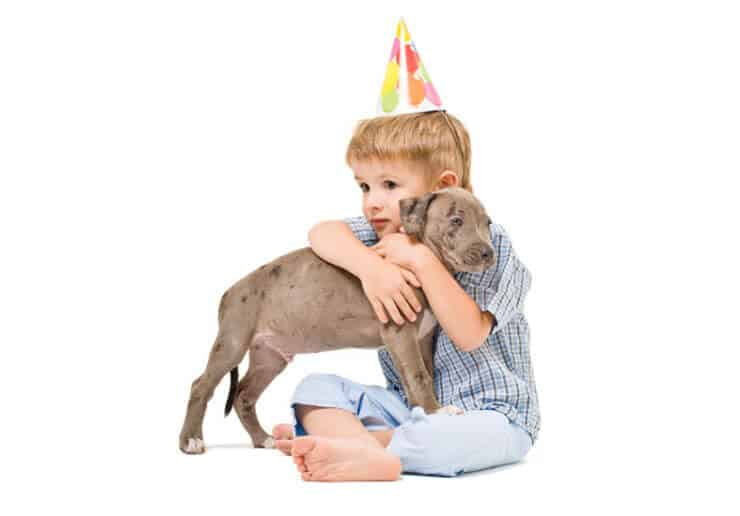 Pit Bull puppy with kid