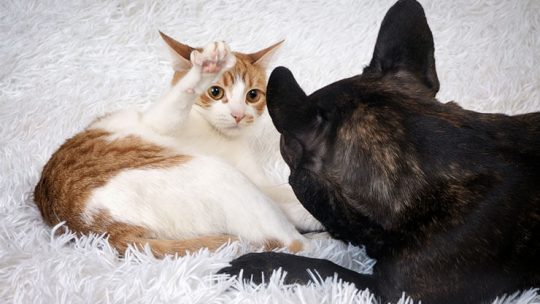 Worst dog breeds for cat owners