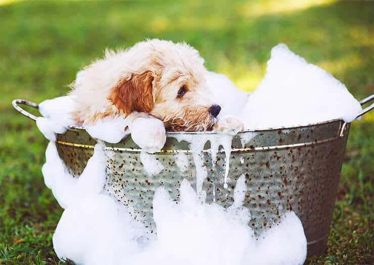 Bath your dog to prevent fleas