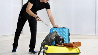 Can drug dogs smell vape