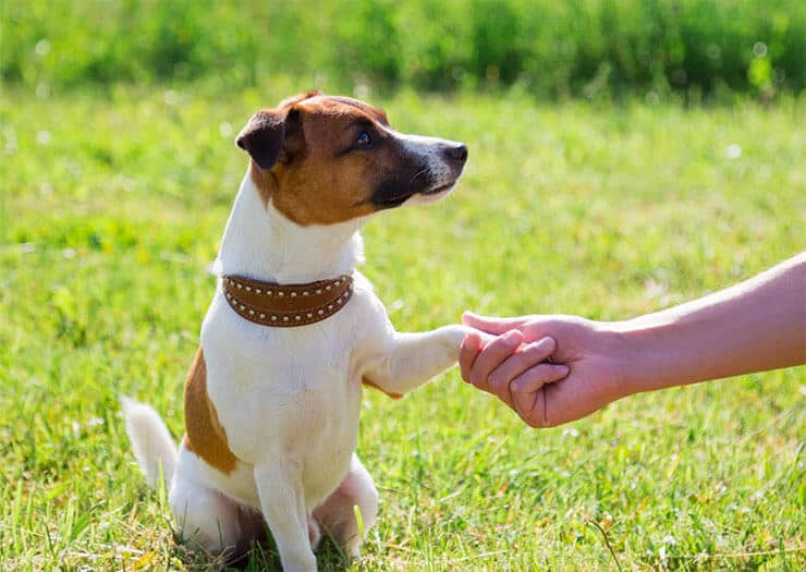 Dog breeds that love to paw