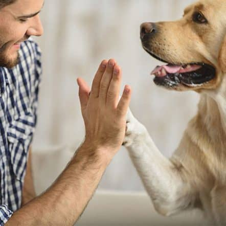 Dog breeds that use their paws a lot