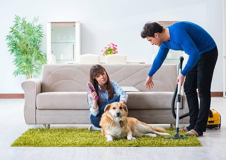 House treatment to prevent dog fleas