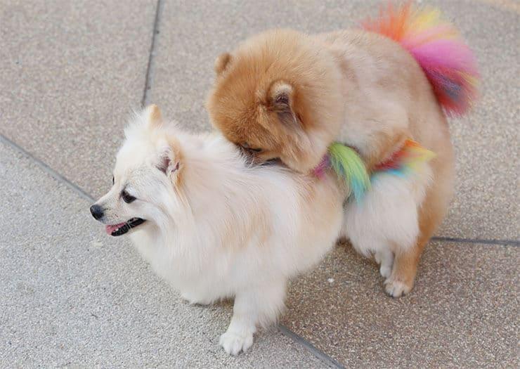 When can male dogs start breeding