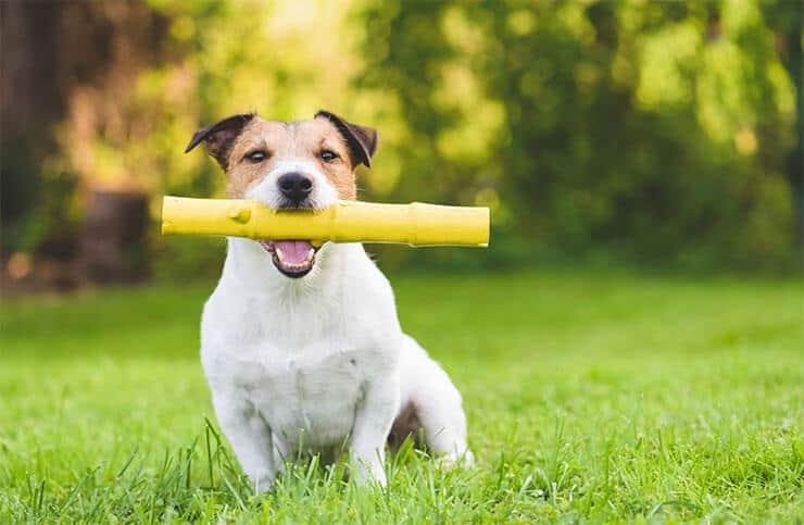 Alternatives to dog sticks