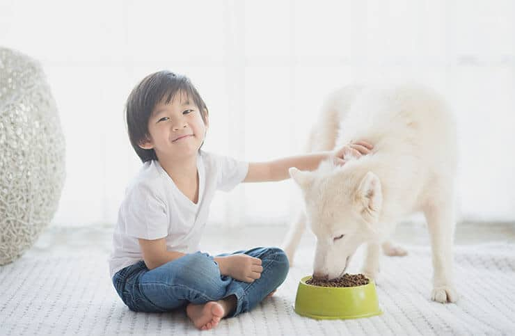 Feeding your Siberian Husky
