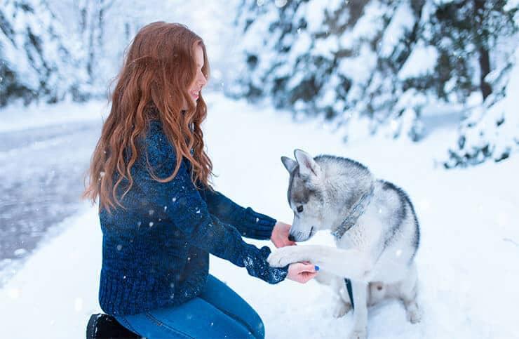 Siberian Husky training