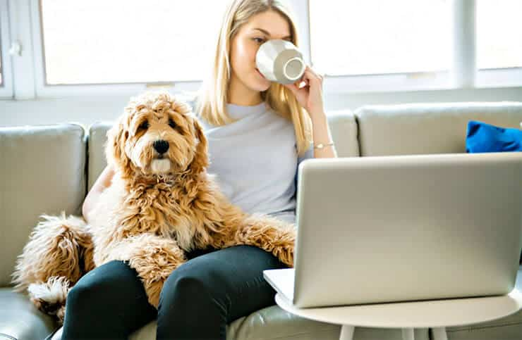 Can F1B Labradoodles live outdoors