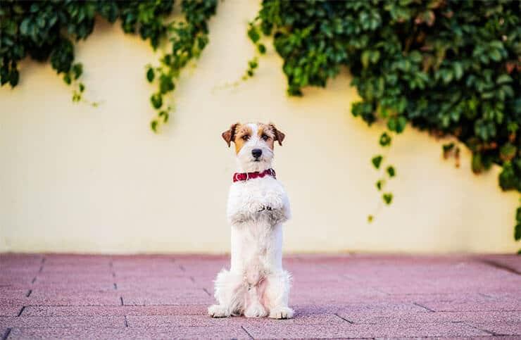 Beg dog command