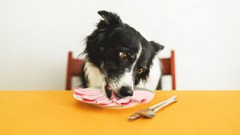 Can dogs eat bologna