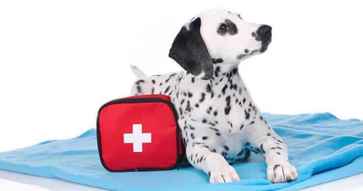 Dalmatian health