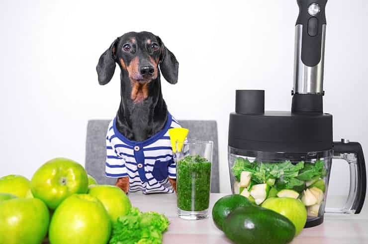 Dog body detox with cilantro