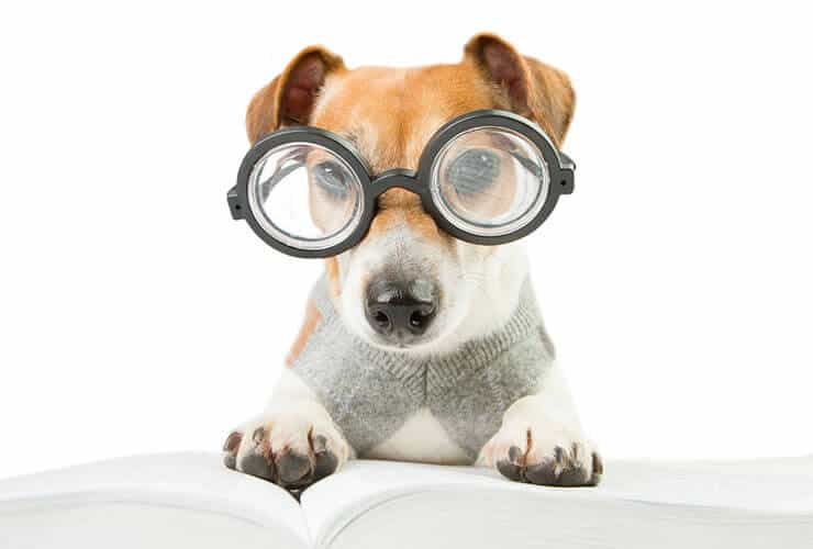 Improve dog's vision and skin