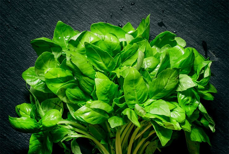 Nutritional benefits of basil