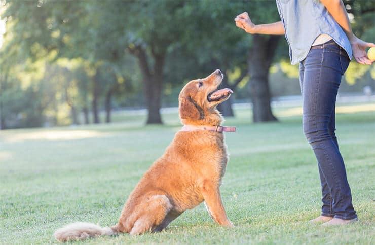 Sit dog command