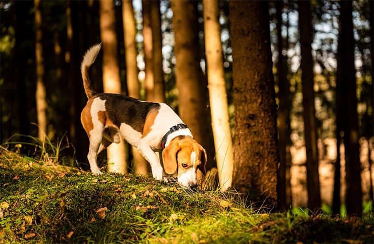 Track dog command
