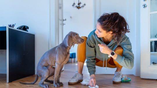 Diabetes insipidus in dogs