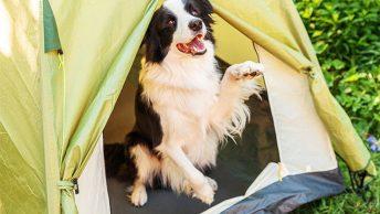 DIY dog tent