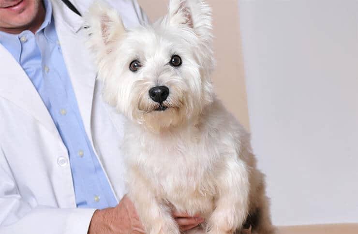 Furcsa, de igaz: Találkozz egy semlegesített kutyával, akinek prostatitis volt
