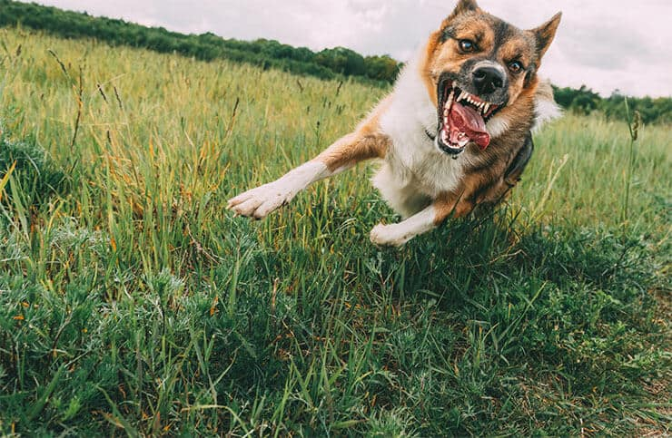What are the symptoms of rage syndrome in dogs