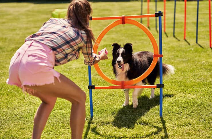 Dealing with Border Collie obesity