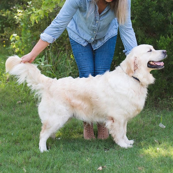 Southern Goldens breeder in TX, USA